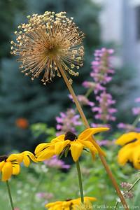 IMG_8066-flower