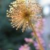 IMG_8059-flower