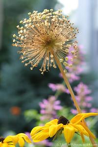 IMG_8061-flower