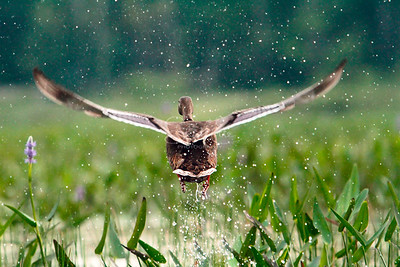 Splashy Takeoff