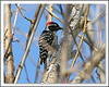 Unusual to see woodpeckers here. Click for larger photo.