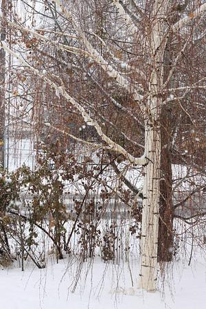 Winter 2009 pics