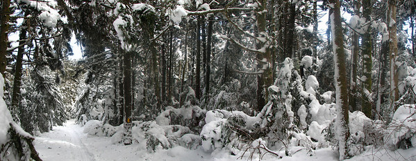 Skiing through the woods on Roan Mountain
