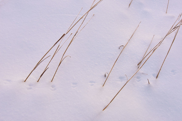 Snowy Footsteps