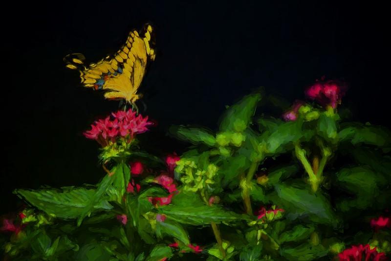 Yellow butterFly Cez 1 -67 lightJDA_6173