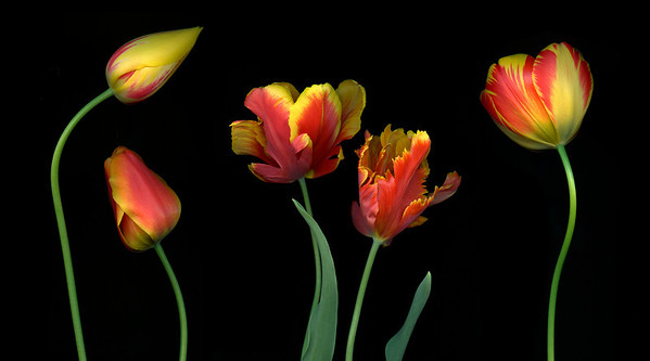 Party of Five: Tulips