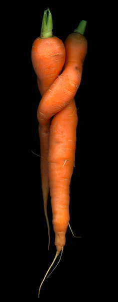 Carrot Lovers