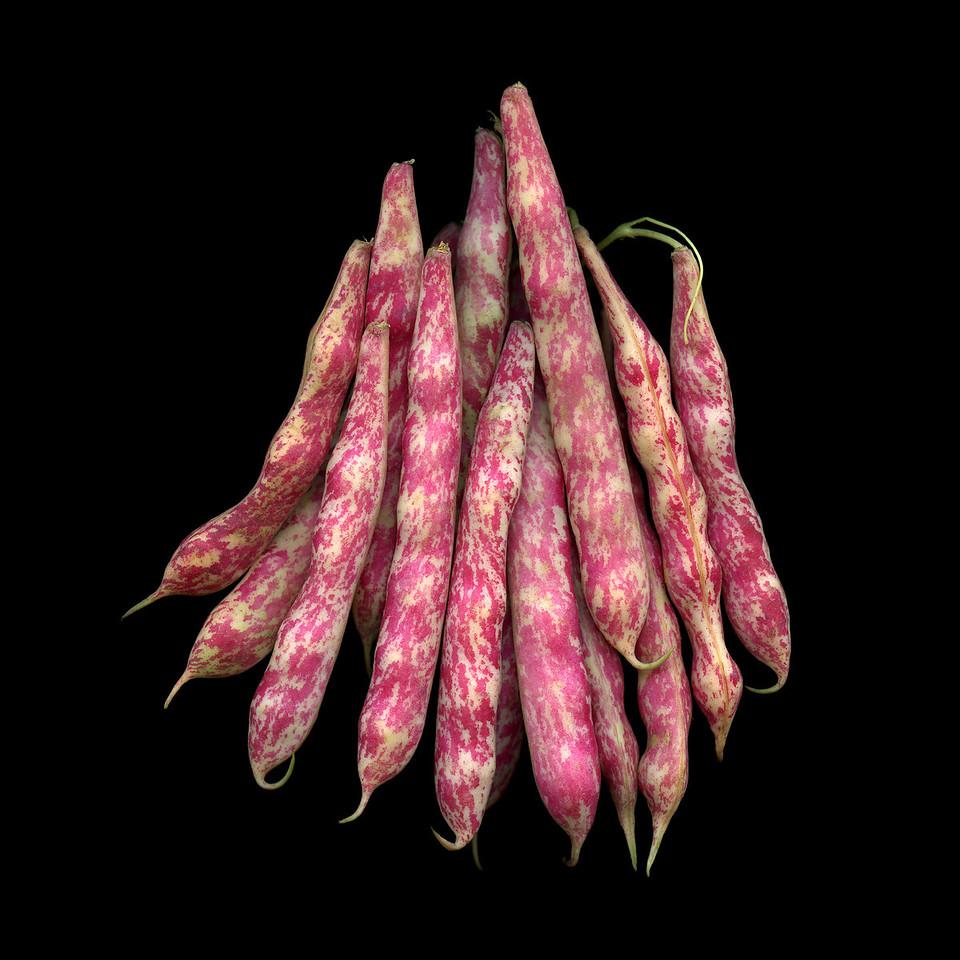 Cranberry Beans #2