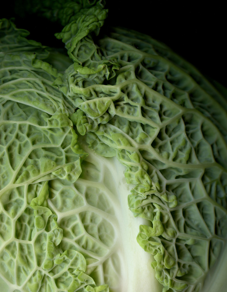 Savoy Cabbage (Wrinkles Can Be Beautiful)