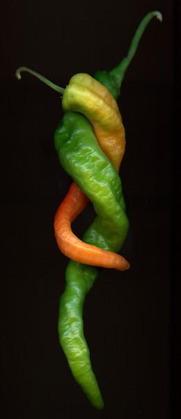Pepper Lovers