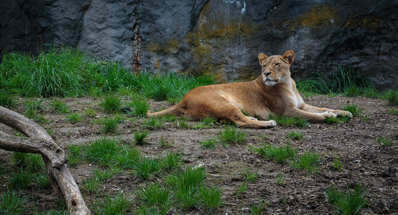Shot at the Woodland Park Zoo in Seattle, WA. April 6 - 2014.
