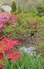 C Sue Bielawski: garden 4