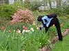 C Sue Bielawski: garden 5