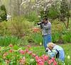 C Sue Bielawski: garden 2.1
