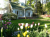 Harriet Crisp: spring at the house