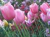 Aurelie Welterlin: pink