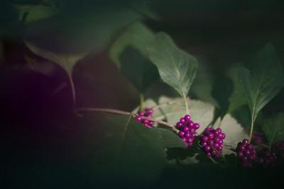20121013_Photowalk_Lg_026