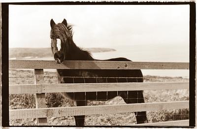 Horse on coast of Wales