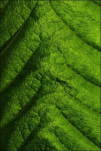 satellite skin
