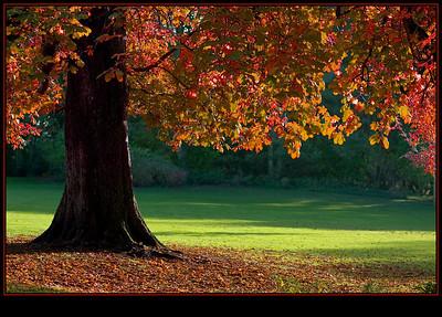 autumnal-colours
