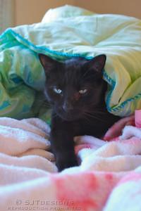 BlackJack in bed