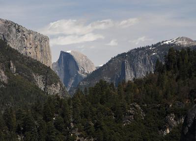 Yosemite, Foresta