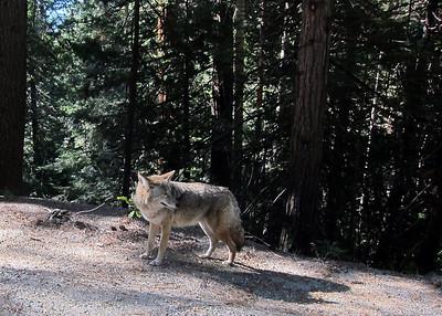 Yosemite National Park, Canon S95