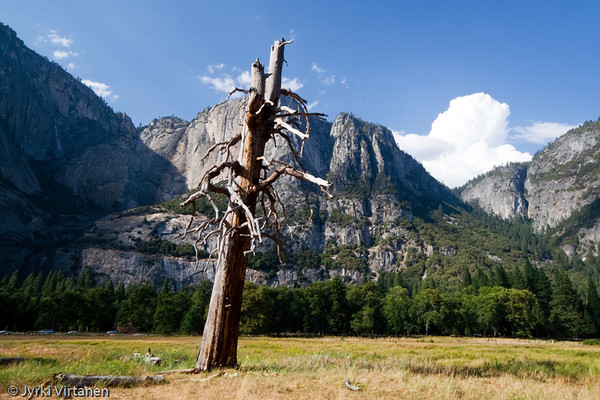 Cooke's Meadow II - Yosemite National Park, CA, USA