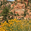 Still spring in Zion, lots of rain this summer for the flowers!