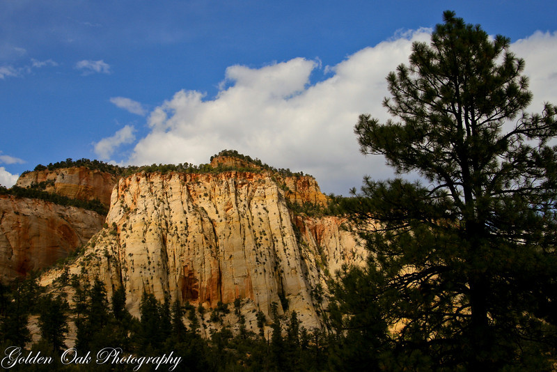 "A beautiful rock face in Zion National Park.for more info check out wiki<br /> <a href=""http://en.wikipedia.org/wiki/Zion_National_Park"">http://en.wikipedia.org/wiki/Zion_National_Park</a>"