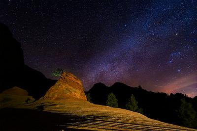 Lonely Little Tree Milky Way