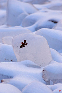 """""""Stuck on You"""", Zion National Park, Ut., 01/13/08"""