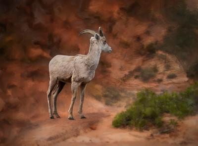 Zion Goat
