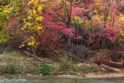 Autumn along the Virgin River