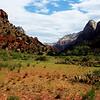 Zion National Park in Utah 14