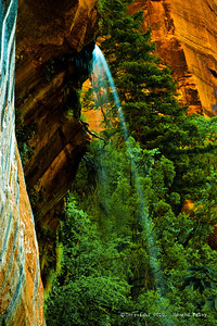 """Emerald Spring"", Zion National Park, Ut., Jul.'07"