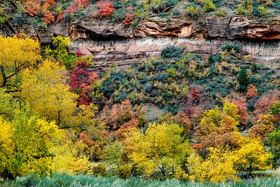 Autumn Near Weeping Rock