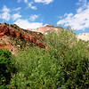 Zion National Park in Utah 15