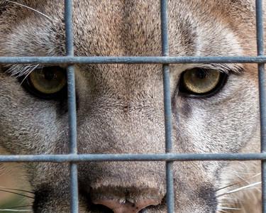 Caged Wild
