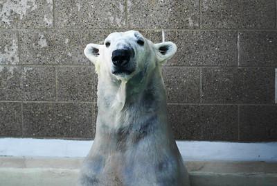 Hot tub polar bear