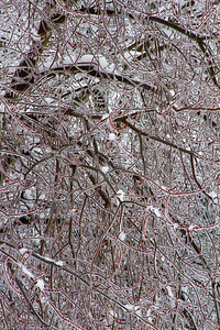 Ice Covered Trees In Pennsylvania