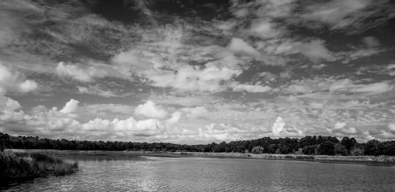 Wetland noir