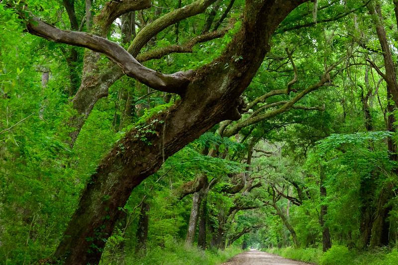 Botany Bay road