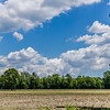 Puffy Clouds Over Trees