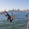 Escape from Alcatraz Test Swim 2017 - San Francisco, CA, USA