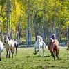 Horseplay II