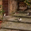 Cats Of Civita
