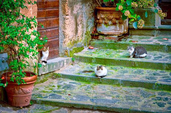 Civita Cats