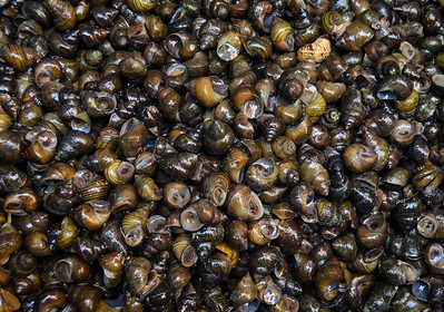 Thai Snails In The Market