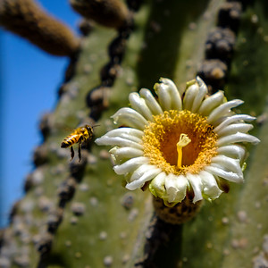 Sweet Cactus Flower